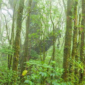 Tropisch Nevelwoud van Chris Stenger
