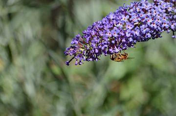 De bezoeker van een vlinderstruik von Yrla Lucassen