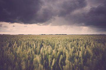 Stormachtige agricultuur landschap boven de polder van Fotografiecor .nl