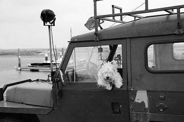 Hondje (terriër) in Land Rover Defender op Terschelling van Jesse Coljee