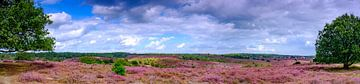 Bloeiende heideheuvels op de Posbank in Nationaal Park Veluwezoom van Sjoerd van der Wal