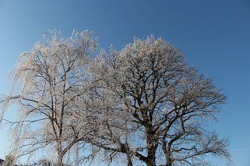 Witte bomen met rijp von Ilona Bredewold