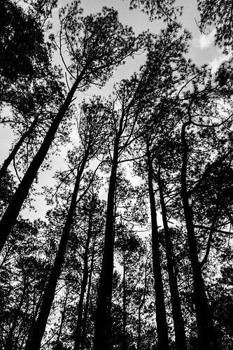 Zwart wit foto van de bomen om mij heen