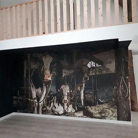 Klantfoto: De koeien van boer Klein van Inge Jansen, op behang
