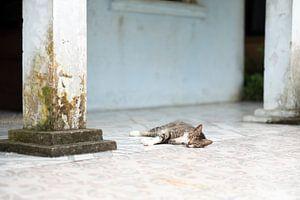 Lazy Sunday van Diane Bonnes