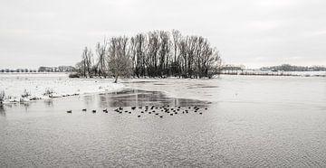 Meerkoeten zwemmen in een gedeeltelijk bevroren meer van Ruud Morijn