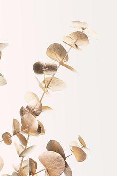 Eucalyptus goud nee 03, 1x Studio III van 1x