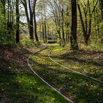 Straßenbahn im Wald (Farbe)