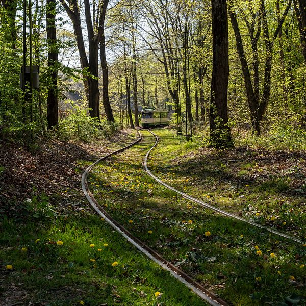 Tram in het bos (kleur) van Sander de Jong