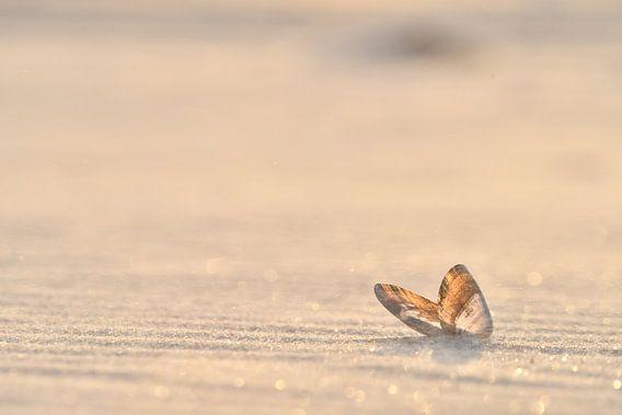 De schelp