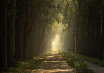 Lane of Light van Quirien Marijs