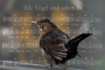 Alle Vögel sind schon da...... van Christine Nöhmeier