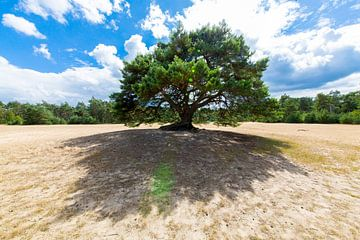 Baum auf dem Sand . von Sander Maas