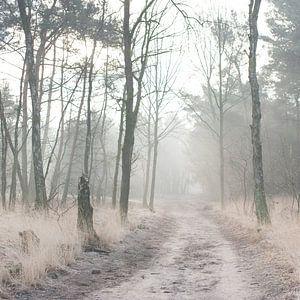 Misty Woods van