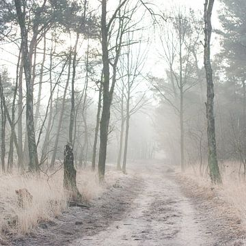 Misty Woods sur Foto NVS