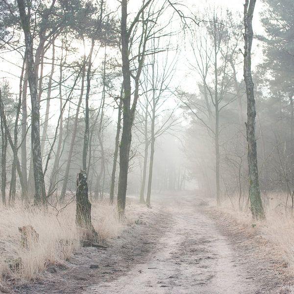 Misty Woods van Foto NVS