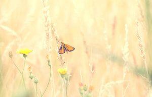 Vlinder op Takje