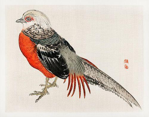 Japanse fazant door Kōno Bairei
