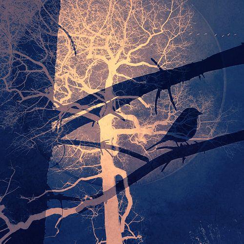 Nachtvogel von