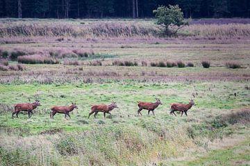 Hirsche in der Bronzezeit von Carola Schellekens