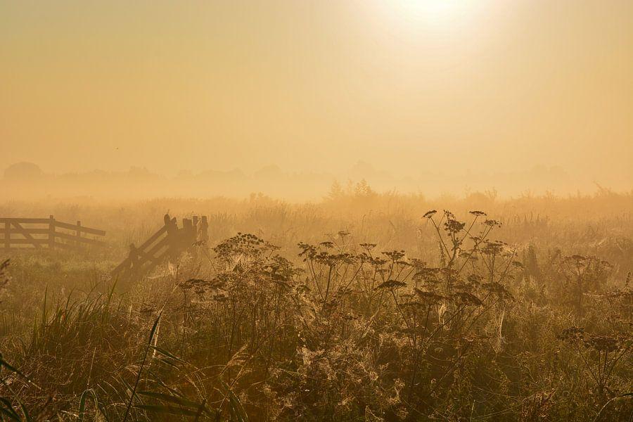 Mistige ochtend in het weiland