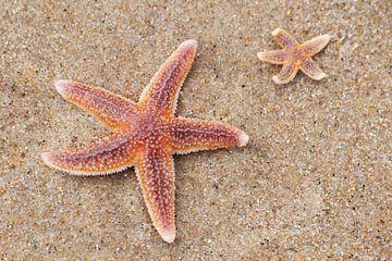 Zeesterren op het strand van Margreet Frowijn