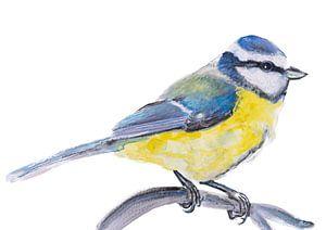 die Blaumeise, Vogelillustration