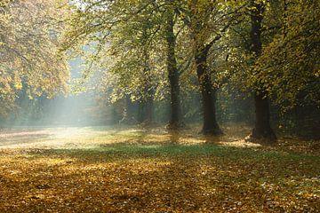 Bomen in de herfst von Michel van Kooten