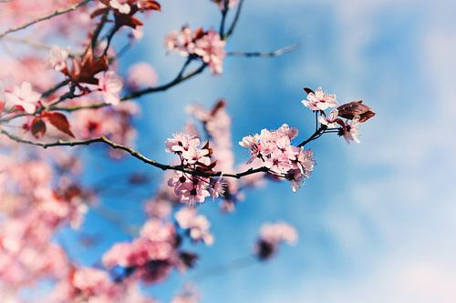 Spring de Lente in van