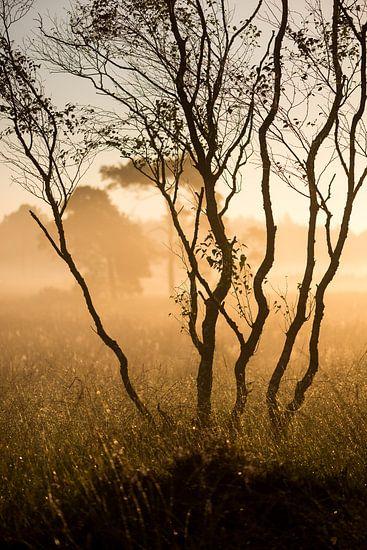 Strabrechtse Heide 257 van Desh amer
