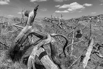 Onfortuinlijk bos van Rob Donders Beeldende kunst