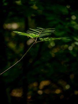 Un morceau de vert solitaire