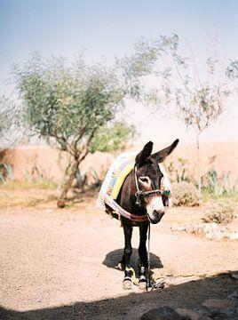 Ezeltje in de woestijn van Marokko van Raisa Zwart