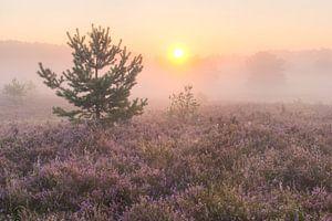 zonsopkomst op de heide