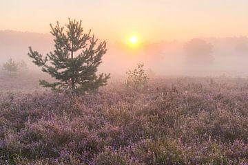 zonsopkomst op de heide von Francois Debets