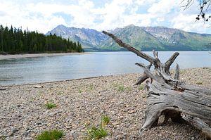 strand met oud hout