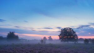 Misty Dawn van Lex Schulte