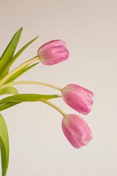 Roze tulp sur Doris van Meggelen