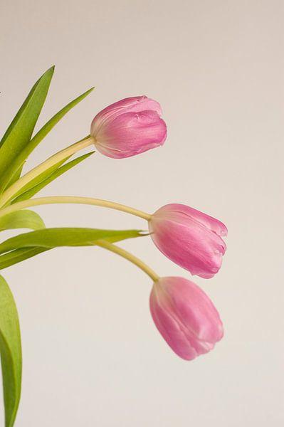 Roze tulp van Doris van Meggelen