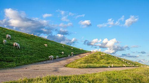 Schaapjes op de Waddenzeedijk met schapenwolkjes