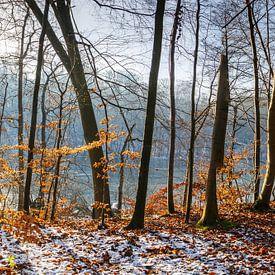 Winterbos aan het meer van Werner Reins