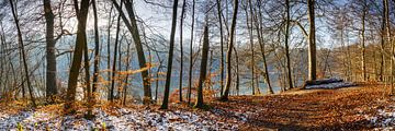 Winterbos aan het meer