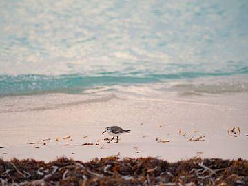 Strandloper op het strand in Cayo Levisa | Reisfotografie Cuba van Teun Janssen