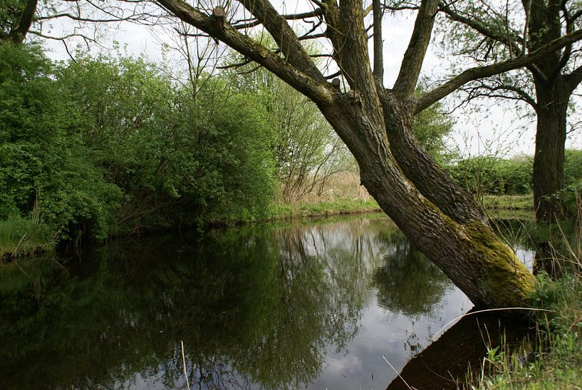 De stilte in Het Jagersveld.  van Bas Smit