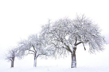 Besneeuwde fruitbomen van Ulrike Leone