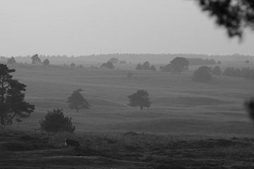Veluwe landschap met koe von Luc Elshout