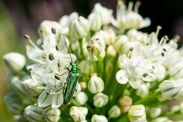 Witte bloem en groene kever van Mickéle Godderis