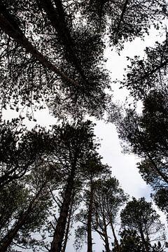Het bos door de bomen van Wytze Kiers
