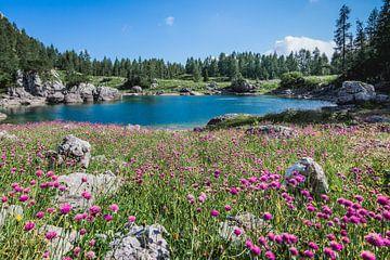 Prachtige alpen bloemen in de Triglav national park van Slovenië  van Nick Chesnaye