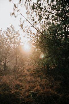 Zonsondergang in een mistig bos   natuurfotografie reisfotografie foto print   Tumbleweed & Fire van Eva Krebbers   Tumbleweed & Fireflies Photography
